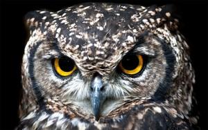 Uil als symbool voor wijsheid